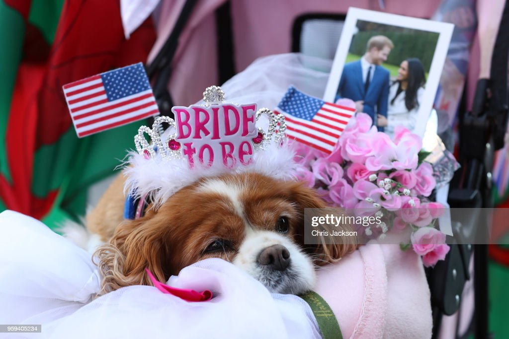A dog sits on her owner's lap as they wait outside Windsor Castle ahead of the dress rehearsal for the wedding of Prince Harry and Meghan Markle on May 17, 2018 in Windsor, England.