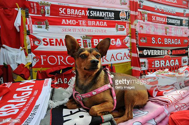 A dog sits on scarves on a marchandise stall prior to the UEFA Europa League Quarter Final first leg match between SC Braga and Shakhtar Donetsk at...
