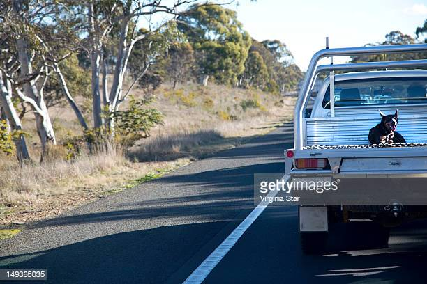 Dog sits on work ute in country Australia