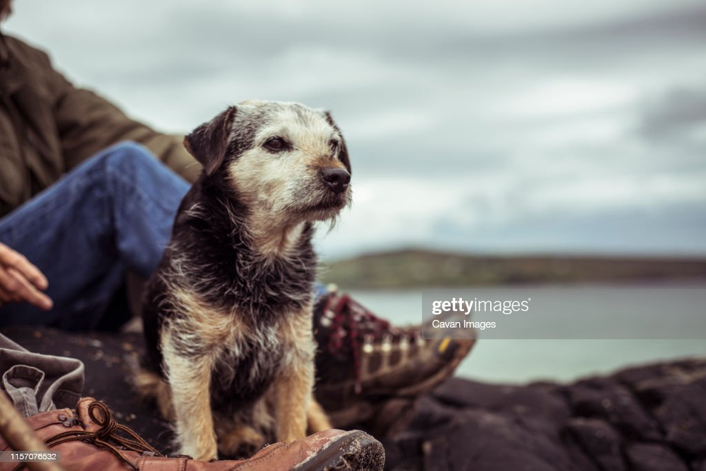 Dog sits to rest hiking with mature retired couple : Stock Photo