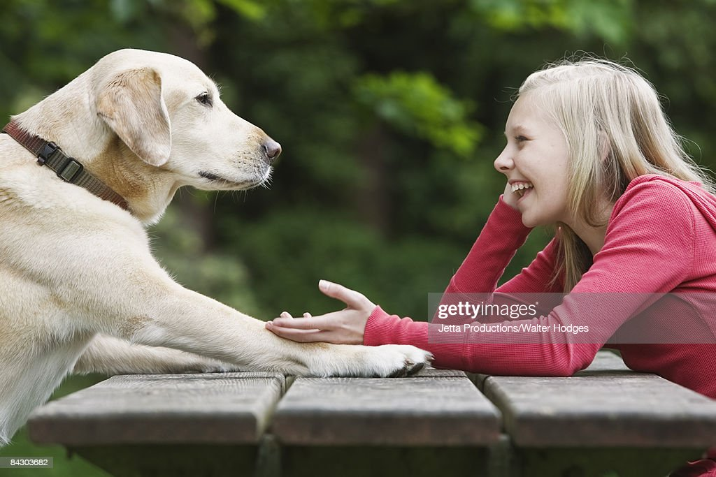 Dog sitting across from girl on picnic table : Stock Photo