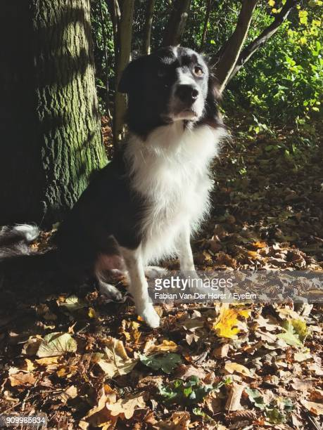 Dog Sitting Against Tree In Forest