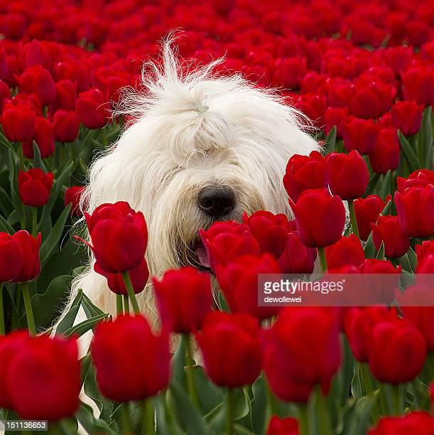 Dog sitting among flower