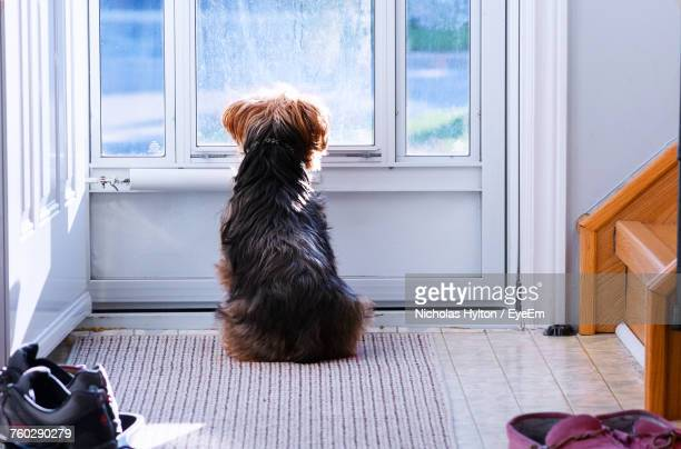 Dog Sitting By Door At Home