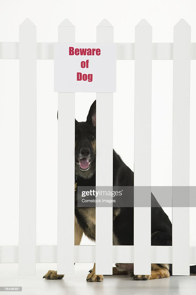 Dog sitting by fence with beware of dog sign : Stockfoto