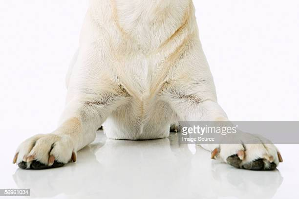 Dog sitting down