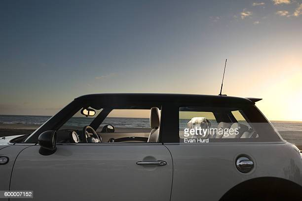dog sitting in back of mini cooper - mini cooper stock pictures, royalty-free photos & images