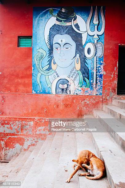 Dog sitting in front of Shiva god painting on a wall of the ghats