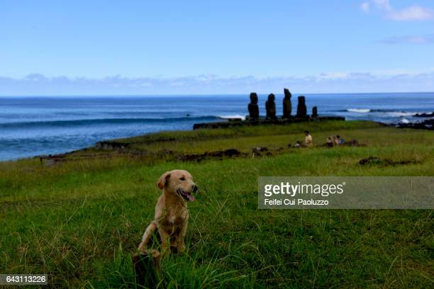 A dog sitting in front of Tahai Moai site of Hanga Roa in Easter Island of Chile
