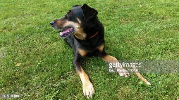 Dog sitting in grass