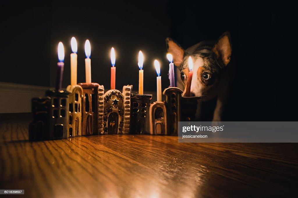 Dog sitting next to lit Hanukkah Menorah : Stock Photo