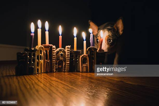 Dog sitting next to lit Hanukkah Menorah