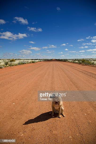 A dog sitting on a dirt road, looking away