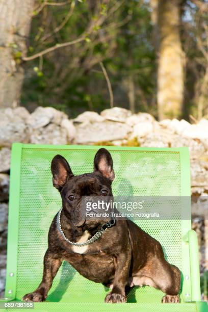 Dog sitting on a green bench in a park near a forest of trees