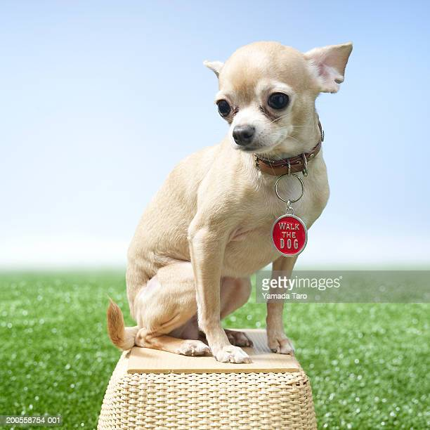 Dog sitting on basket