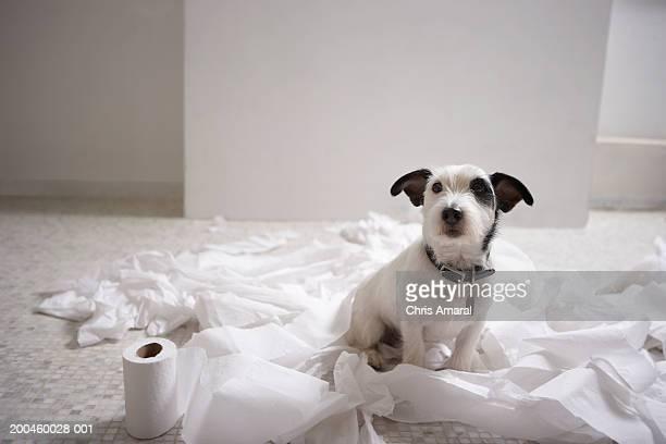 Dog sitting on bathroom floor amongst shredded lavatory paper
