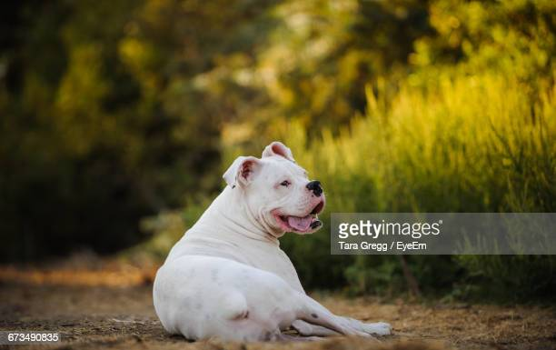 Dog Sitting On Dirt Road By Grass