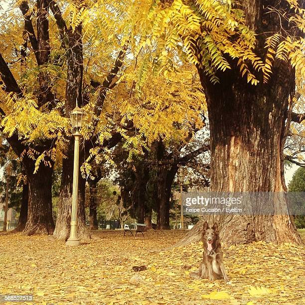 dog sitting on dry fallen leaves - dry mouth stock photos and pictures