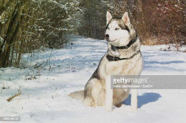 Dog Sitting On Field During Winter