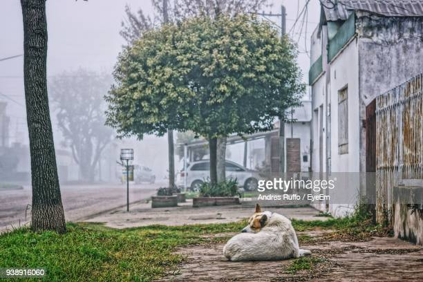 dog sitting on field - andres ruffo stock-fotos und bilder