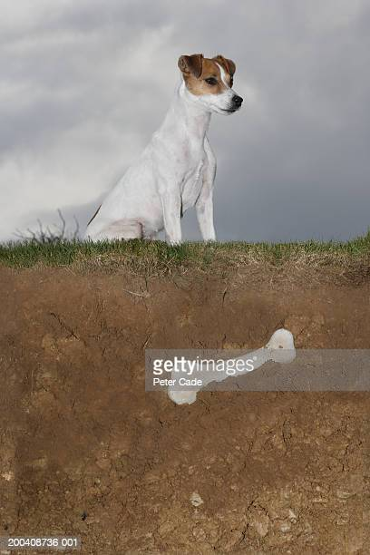 Dog sitting on grass above buried bone, side view