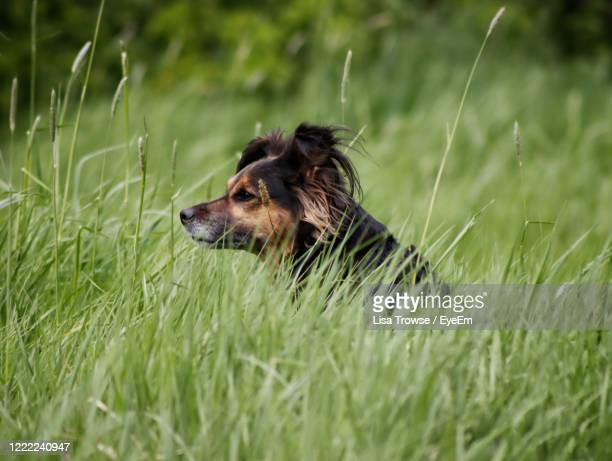 dog sitting on grass - esher stock pictures, royalty-free photos & images