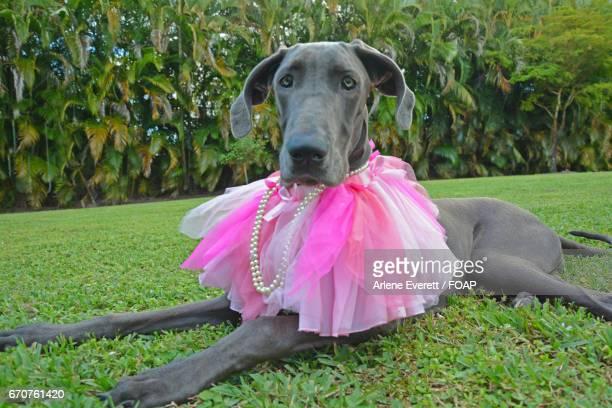 Dog sitting on grass wearing pink tutu