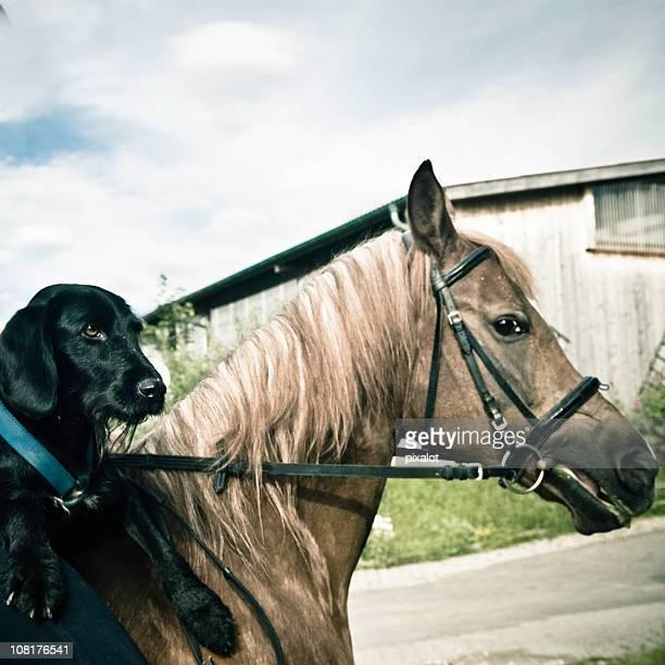 Dog Sitting on Horses Back