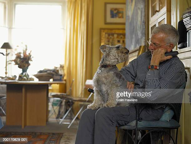 Dog sitting on man's lap, looking back at man, mid section