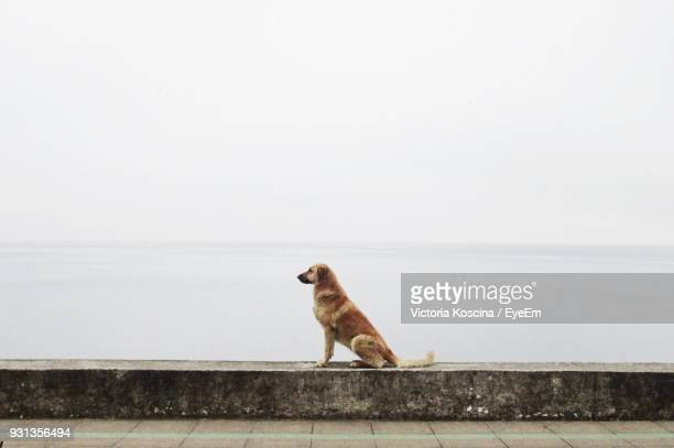 Dog Sitting On Retaining Wall By Sea Against Clear Sky