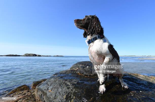 Dog sitting on rock at a beach in southern norway in Norway in August 22nd 2017