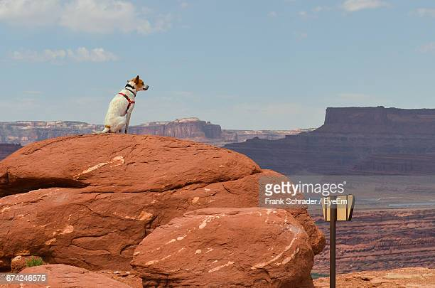 dog sitting on rock formation at canyonlands national park - frank schrader stock pictures, royalty-free photos & images