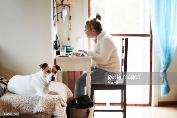 Dog sitting on sofa with disabled woman using laptop in background at home