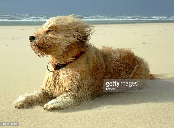 Dog sitting on the beach on a windy day