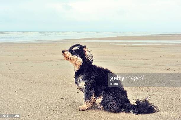 A dog sitting on the beach