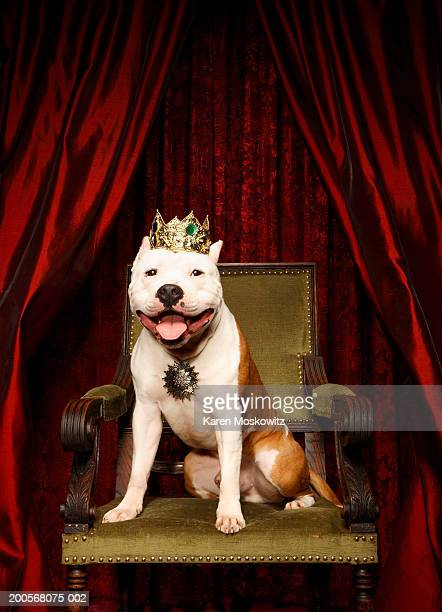 Dog sitting on throne with crown on head