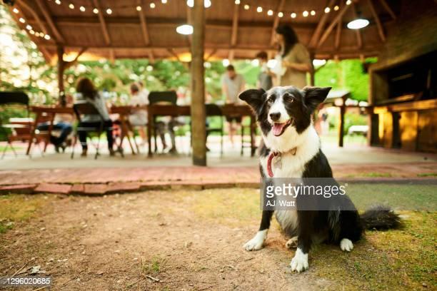 家族と一緒に外に座っている犬が夕食を食べる - イヌ科 ストックフォトと画像