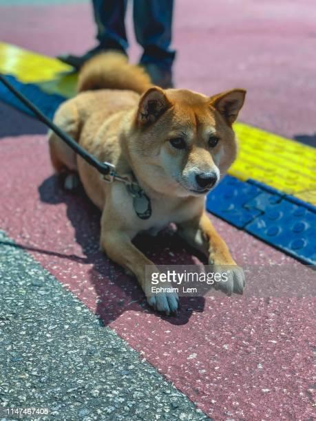 dog sitting still - ephraim lem stock pictures, royalty-free photos & images