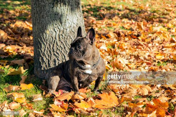 dog sitting under a tree - dead dog stock pictures, royalty-free photos & images