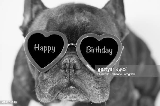 Dog sitting with funny sunglasses and happy birthday