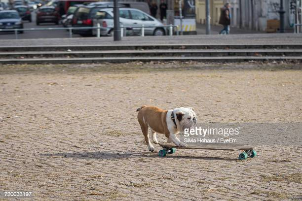 Dog Skateboarding On Street