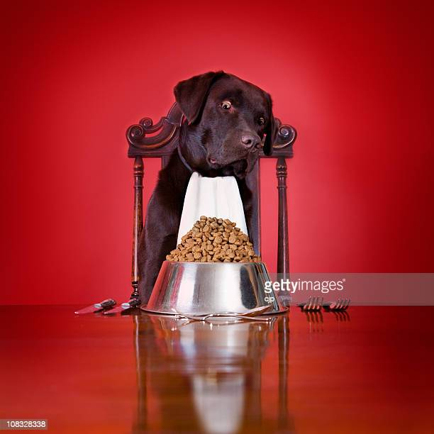 犬のディナー