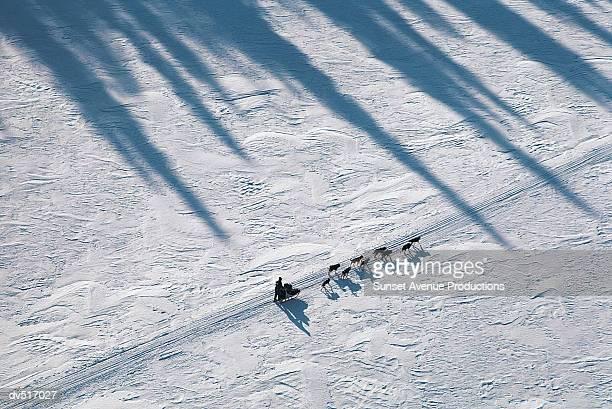 Dog sled in the Iditarod Race, Alaska, USA