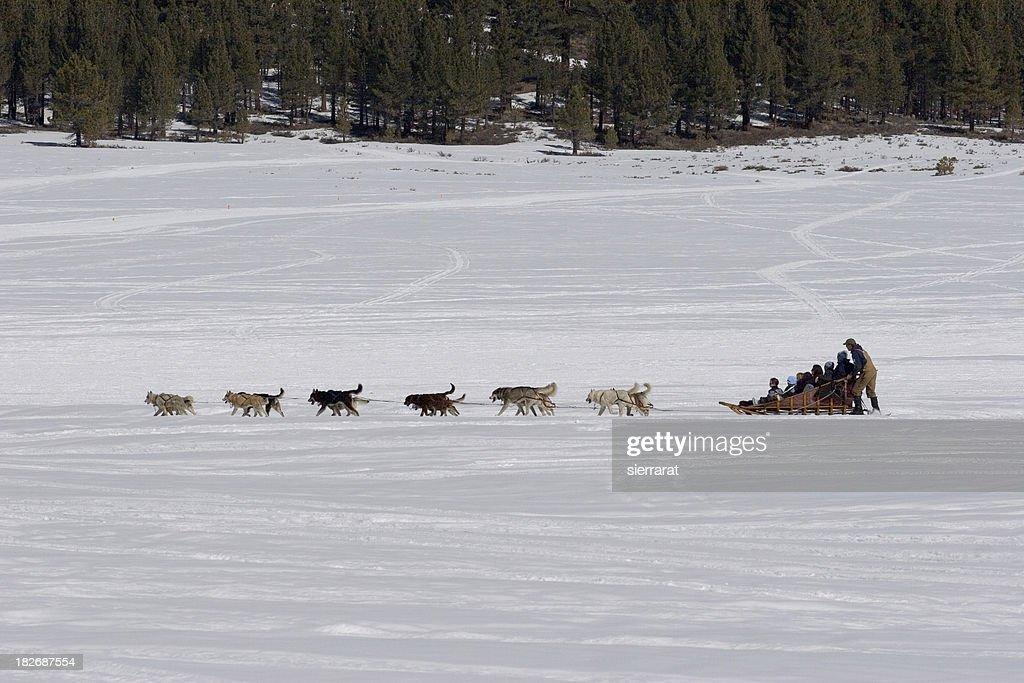 Dog Sled & Passengers : Stock Photo