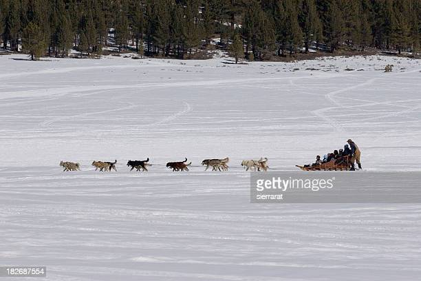 dog sled & passengers - dog sledding stock photos and pictures