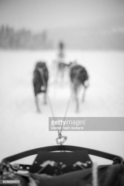 dog sled - husky stock pictures, royalty-free photos & images