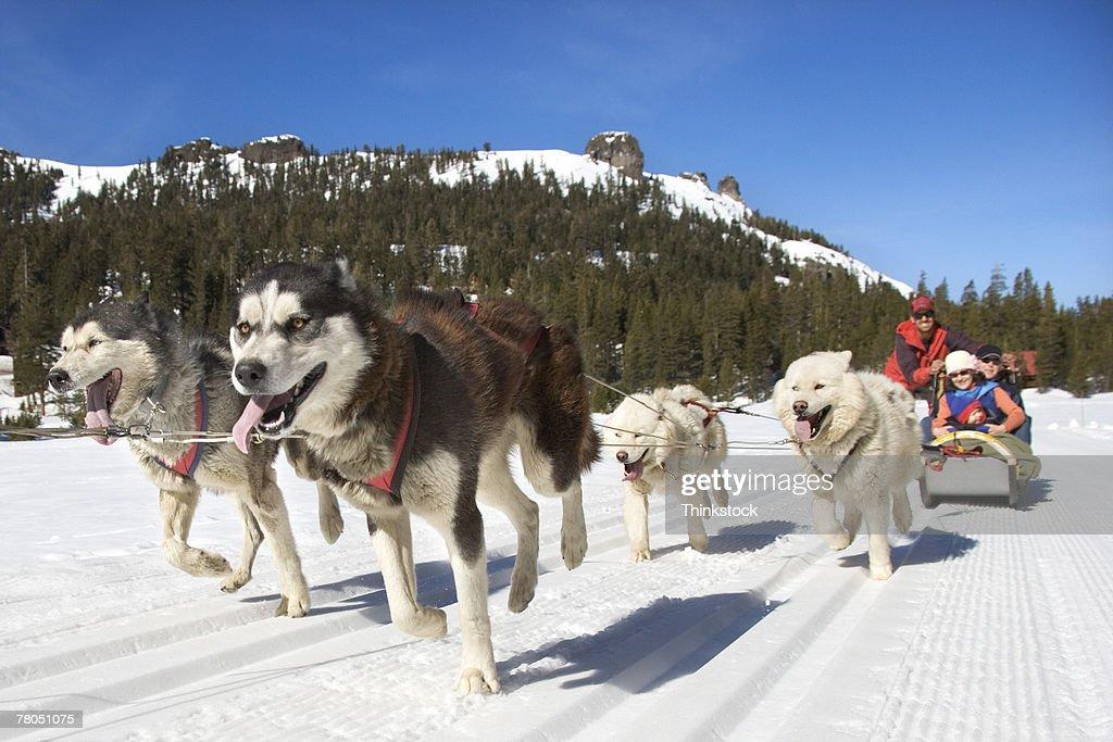 Dog sled : ストックフォト