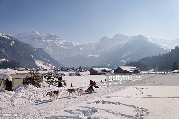 dog sled race in the swiss alps - dog sledding stock photos and pictures