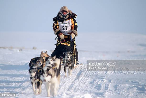dog sled team racing over pack ice - iditarod stock pictures, royalty-free photos & images
