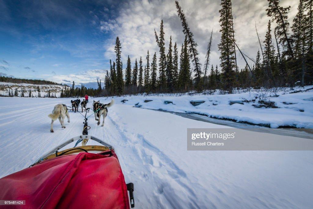 Dog sled team travelling through winter landscape, Yukon, Canada : Stock Photo